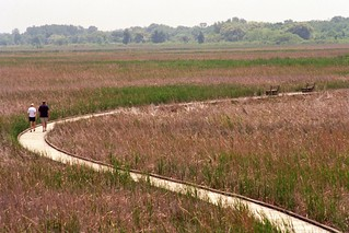 Point Pelee Marsh Boardwalk 3