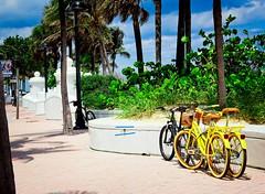 Beach Bikes 35 (LarryJay99 ) Tags: 2018 beach streets people ftlauderdale ocean atlanticocean bikes bicycle bikeculture yellow retail baskets pattern textures bluesky sky seawall magicsky seagrapes