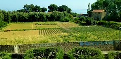 Vitamiglia, Italy (the_maria_medic) Tags: vitamiglia italy mentonfrance farming frenchriviera viewofthemediterranean