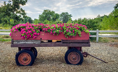 The Flower Wagon (Angles & Edges) Tags: centennial colorado unitedstates us flower tagawasnursery martinwitt anglesedges iphone imagestacking wagon cloud wheel cart