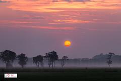 Sunrise Sandebuur Drenthe Netherlands (Reina Smallenbroek) Tags: reinasmallenbroek onlanden sandebuur sunrise zonsopkomst landscape landschap mist fog trees bomen canonnederland