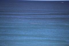 IMG_3584 (gervo1865_2 - LJ Gervasoni) Tags: surfing with whales lady bay warrnambool victoria 2017 ocean sea water waves coast coastal marine wildlife sealife blue photographerljgervasoni