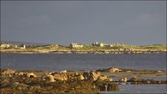 Connemara (Papyricko) Tags: irlande ireland eire connemara tourbière