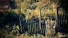 IMG_20180916_105817 (Željko V. Mitić) Tags: september outdoors nature naturephotography village countryside sunny sunnyday morning picketfence