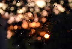 Evening, after the light rain. (Beckerhenning) Tags: rain regen tropfen drobs nikon d7200 sigma 1750mm lights bubbles 1750
