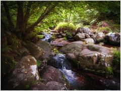 Stream In Wicklow (kckelleher11) Tags: 1122mm 2018 e300 ireland olympus august flowing stream water wicklow zuiko