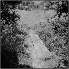 The Way Home (Koprek) Tags: rolleiflex28f film analog croatia 6x6 desinić summer 2018 fomapan 100 rural