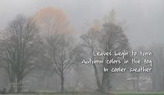 262/365 - Daily Haiku: Autumn (James Milstid) Tags: dailyhaiku haikuaday haiku haiga poetry jemhaiku autumn fall fog foggy