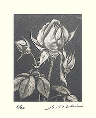 Rose (Japanese Flower and Bird Art) Tags: flower rose rosa rosaceae toshi modern intaglio print japan japanese art readercollection