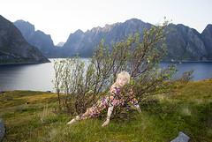 goodnight, reinefjord (. Wolfwendy) Tags: lofoten fjord green norway reine reinefjord hamnoy nordland nordic birch fineartphotography