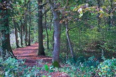 Which Way Now (TERRY KEARNEY) Tags: trees tree woods forest fields pathway path nature wildlife canoneos1dmarkiv cheshire daylight day explore europe england ellesmereportcheshire flowers kearney landscape oneterry outdoor terrykearney rural 2018 park grass wood