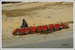 La vida en rojo (mariadoloresacero) Tags: street rue callejera vente venta boy garçon niño egypt egypte egipto red rouge rojo tomatos tomates