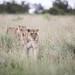 Beautiful Jamhuri ya Kenya!