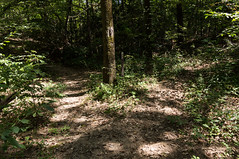 Leaving the spur trail (MarksPhotoTravels) Tags: bluewallpreserve greenvillecounty southcarolina