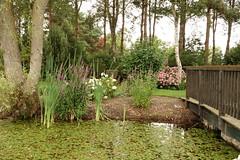 Priory Maze gardens (hedgehoggarden1) Tags: priorymazegardens gardens norfolk northnorfolk eastanglia uk sonycybershot landscape water flowers trees bridge sony