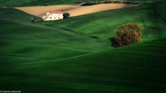 Nel verde (SDB79) Tags: campagna verde molise campo agricoltura coltivazioni grano colline ururi