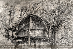 The house on the tree (ILO DESIGNS) Tags: cottage fineart monochrome texturing old childhood trees house cabin wooden forest rural retro cabaña árbol infancia pasado time niñez casita d3300 1855 traditional madera bosque campo countryside monocroma blackandwhite sepia