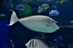 Ripley's Aquarium of Canada, Toronto, ON (Snuffy) Tags: ripleysaquariumofcanada toronto ontario canada