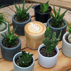 Monday = ☕️ + 🌵 . #mondaymotivation #latteart #letsgo #mondaymood #succulents #baristalife (bombompatisserie) Tags: loughborough cake cafe bom patisserie