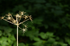 Indian Summer (LHadder) Tags: indiansummer babielato plants warszawa warsaw poland polska królikarnia