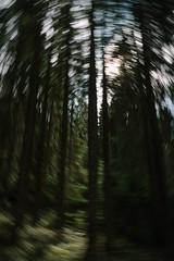 oslo pt 2 (112 of 215).jpg (jonneymendoza) Tags: trees oslo traveling exploring jrichyphotography forest hiking walking naturephotography green nature travelling explore forestwalk