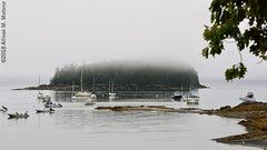 Island in the Fog (A.Maltese) Tags: island fog trees seascape sailboats maine weather boats