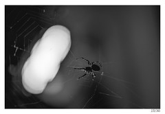 Spider (Aljaž Anžič Tuna) Tags: spider night light dof bouquet insect animal photo365 project365 onephotoaday onceaday 365 35mm 365challenge 365project nikond800 nikkor nice nikon nikon105mmf28 105mmf28 f28 macro d800 dailyphoto day dark bw blackandwhite black white blackwhite beautiful