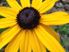 Autumn Flowers Canada Gardening (Mr. Happy Face - Peace :)) Tags: closeup macro flower floral nature gardening yyc albertabound canada cans2s fall weather september art2018