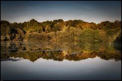 Lake (paullangton) Tags: lake trees water reflection hertfordshire autumn green blue sky landscape serene canon nature colour light park mirror calm still duck countryside flora