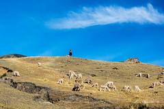 Shepherd (E. Aguedo) Tags: shepherd hill alpaca cusco peru southamerica sky people clouds animal camelid