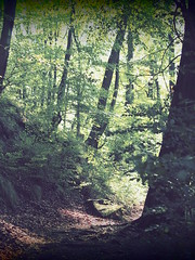 sagenumwobener Harz (1elf12) Tags: harz winterberg radau hanggraben wald forest germany deutschland