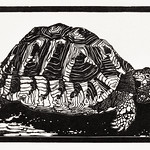 Turtle by Julie de Graag (1877-1924). Original from the Rijks Museum. Digitally enhanced by rawpixel thumbnail
