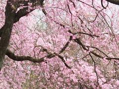 a (20) (hiromi89) Tags: japan beauty beautiful scenery flower wood pond