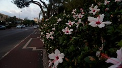 First (h.mosko) Tags: nature flowers streetphotography street sony sonya6300 earth green