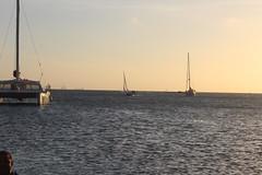 IMG_5846 (eric15) Tags: aruba international regatta 2018 dash casse tete melody bintang vanessa optimist beach cat surfside bar races race racing sail sailing boat boats yachts fun party love harriette slot