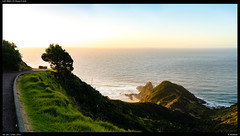 Path north - Cape Reinga (Falcdragon) Tags: sonyzeisssonnarfe1855mmza sonya7riialpha ilce7rm2 capereinga landscapelover sunset golden hour newzealand northland sea sky light path tree cape headland