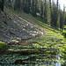 Isa Lake (Craig Pass, Yellowstone, Wyoming, USA) 9