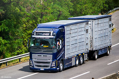 Volvo FH16.550 IV Globetrotter (I) (almostkenny) Tags: lkw truck camion ciężarówka i italia italy volvo fhiv fh16 globetrotter livestock tandem drawbar fm057gb hp500 fh16550