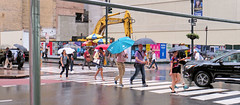 It's Raining ... It's Raining (PDX Bailey) Tags: newyorkcity new york city urban eastcoast crowd people mass many colorful building architecture street photography photo picture color rain umbrella storm car tree road blue red yellow construction equipment graduate
