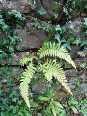 Exmoor Nature (fraktalisman) Tags: devon england lynton lynmouth lyn valley nature river watersmeet exmoor