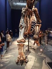 Expo Trex (gab113) Tags: expo paris dinosaure