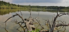 At the Lake (Hugo von Schreck) Tags: hugovonschreck onlythebestofnature grebenhain hessen deutschland lake see germany europe canoneos5dsr tamron28300mmf3563divcpzda010