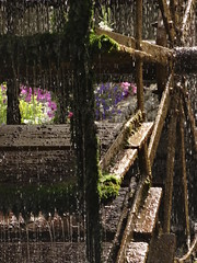 Paddle wheel (degreve.sarah) Tags: wheel paddle flowers water provence