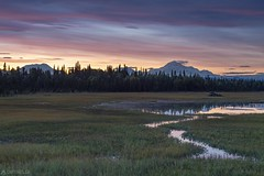 Dusk in the swamp - Alaska (Captures.ch) Tags: wolken clouds sunset sonneuntergang evening dusk abenddämmerung abend denalistatepark denali alaska talkeetna petersville water wasser wald tree sky see river mountains landschaft landscape lake hügel himmel hill gras forest baum berge fluss