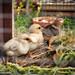 Pour un jardin bio, le meilleur des pesticides._DSC4223