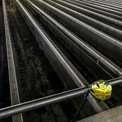 well, here's one perspective (MyArtistSoul) Tags: onepointperspective yellow mylar balloon trapped parkingstructure ribbed concrete ceiling sprinklers parallel lines angle pattern minimal abstract urban square 3109 iphone7