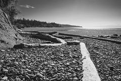 MuirCreek2 (SarahBK Photography) Tags: beach britishcolumbia d5000 erosion landscape layers macro muircreek nature nikon outdoors pacificocean rocks shell summer