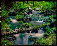 Mossy rocks in Roaring Fork. (benjaminking1) Tags: roaring fork gatlinburg tennessee great smoky mountain national park gsmnp waterfall long exposure penta 45f