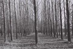 Roseraie park (Ephorik) Tags: minolta xg1 argentique nb noir blanc bw blackandwhite film landscape travel toulouse roseraie