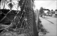 Alambrado (mavricich) Tags: película perro mascota pentax spotmatic misiones monocromo monocromático monochrome calle street dog gente alambre vereda sol calor